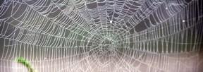 spider-net-g8i1
